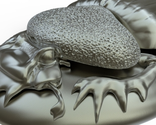 Close up of Zbrush model